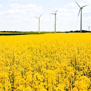 Sveriges miljöarbete