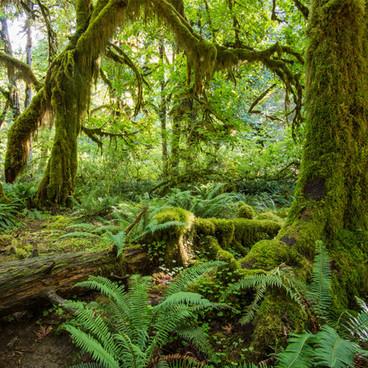 Jordens klimatzoner och vegetationsbälten